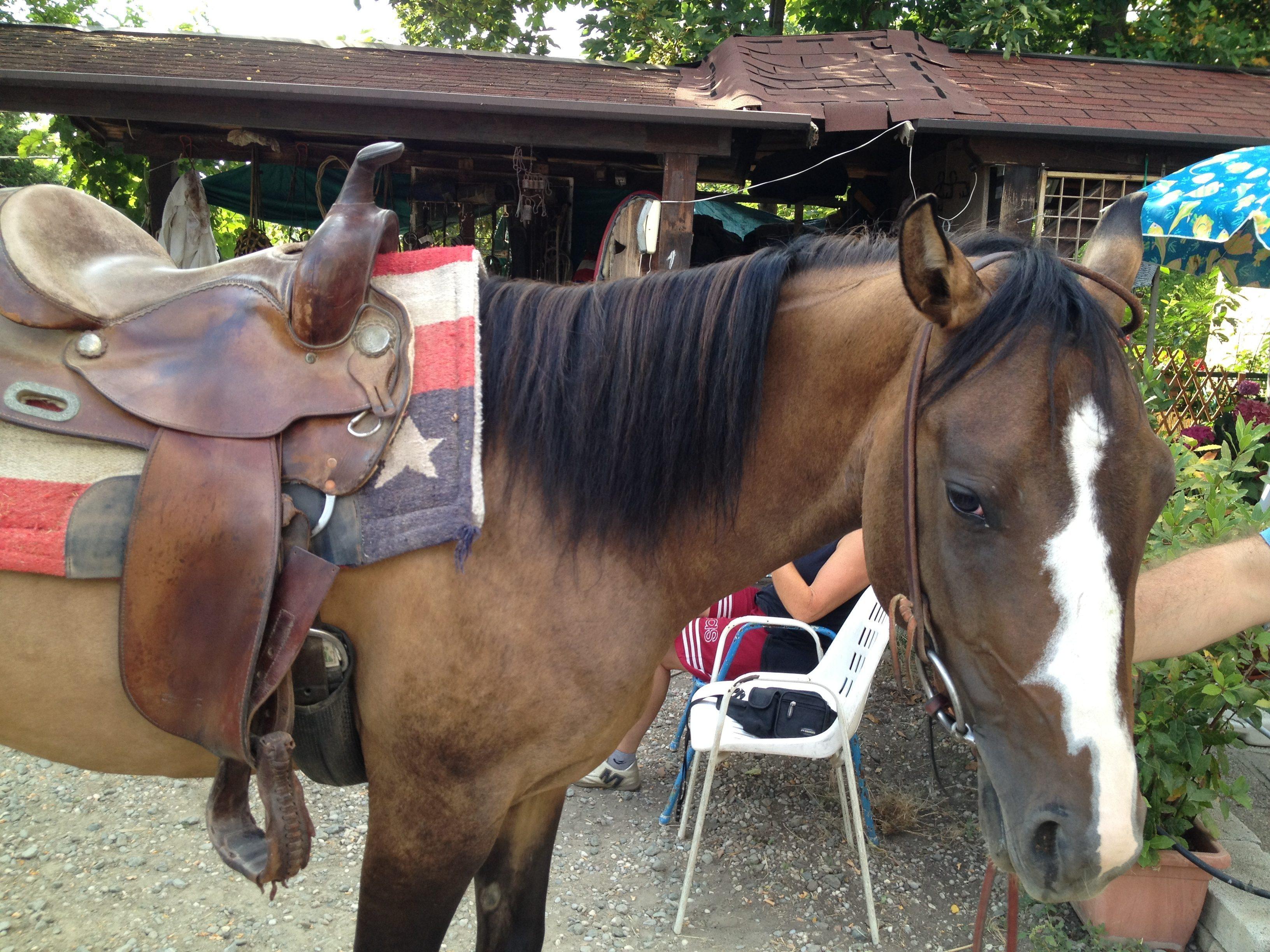 Un sabato a cavallo con smartbox e vapederm federica - Avere un cavallo ...