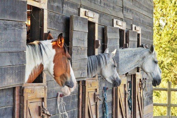 cavalli a ca' maddalena