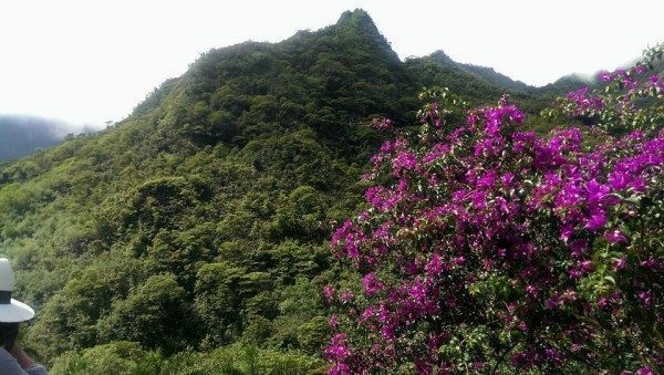 Tahiti verde