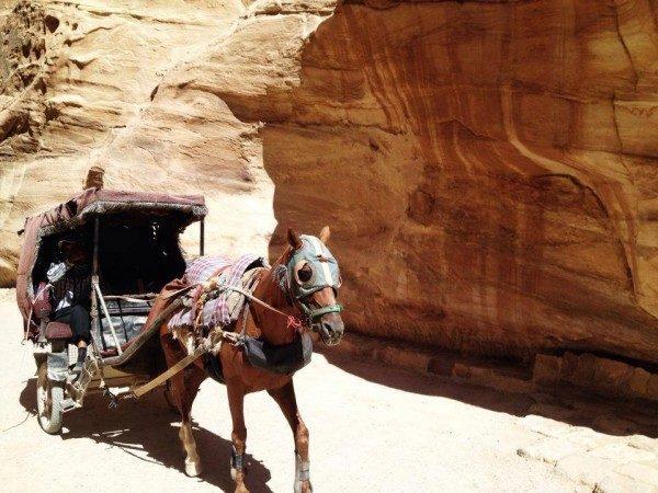 Cavalli Petra