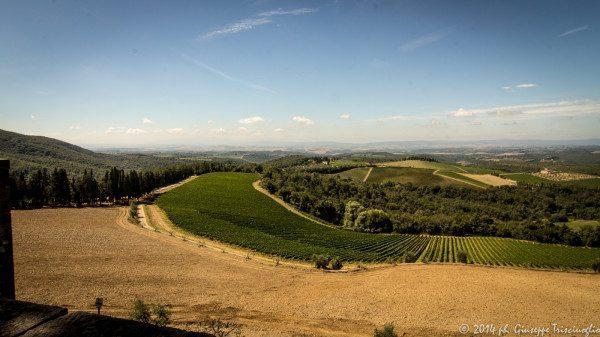colline del Chianti