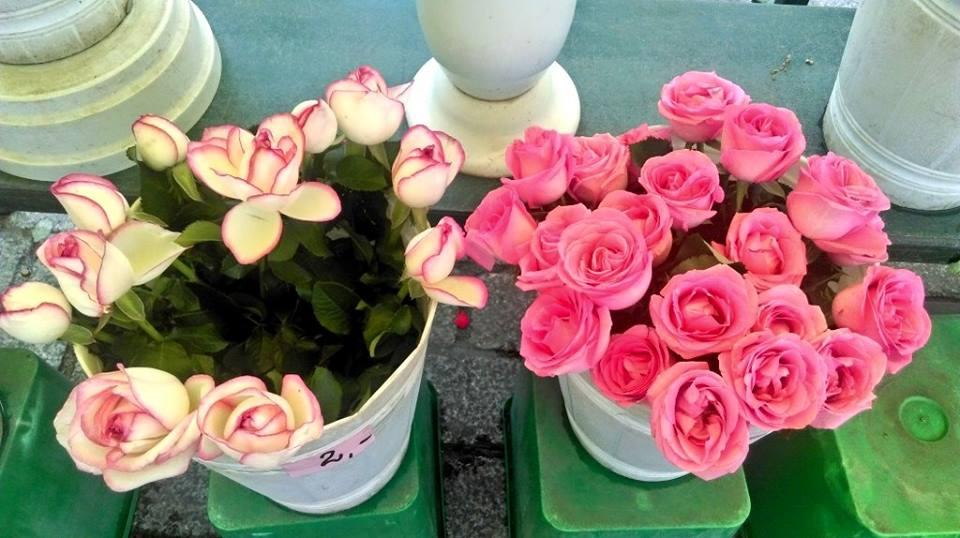 polonia-fiori
