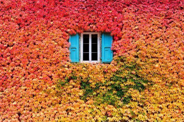 foliage-america-nord