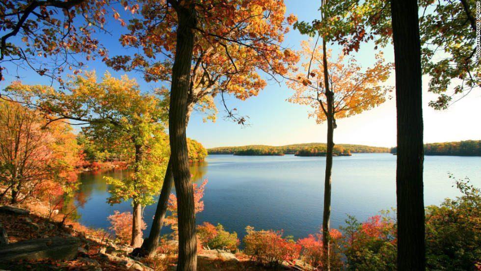 foliage-lago