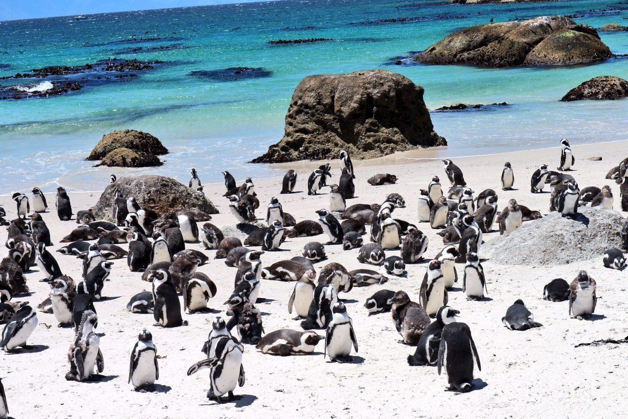 Le spiagge pi belle del sudafrica da cape town fino a for Sud africa immagini